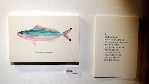 魚の肖像Ⅱ 2017-05-02 (17)