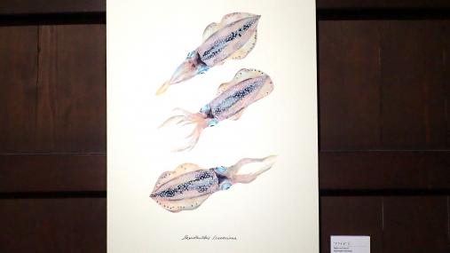 魚の肖像Ⅱ 2017-05-02 (20)