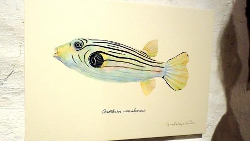 魚の肖像Ⅱ 2017-05-02 (26)