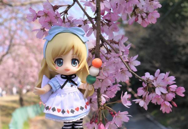 アリスちゃんとしだれ桜201704