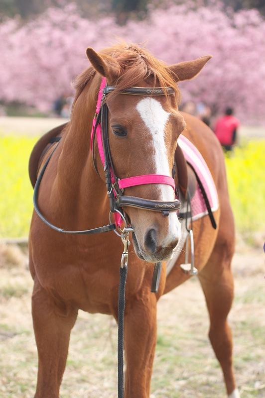 東大山に河津桜が咲く頃 2