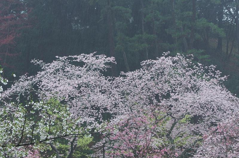 雨のフラワーパーク 4