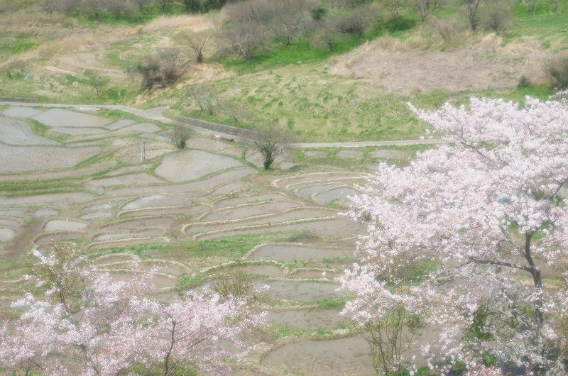 棚田に訪れる春