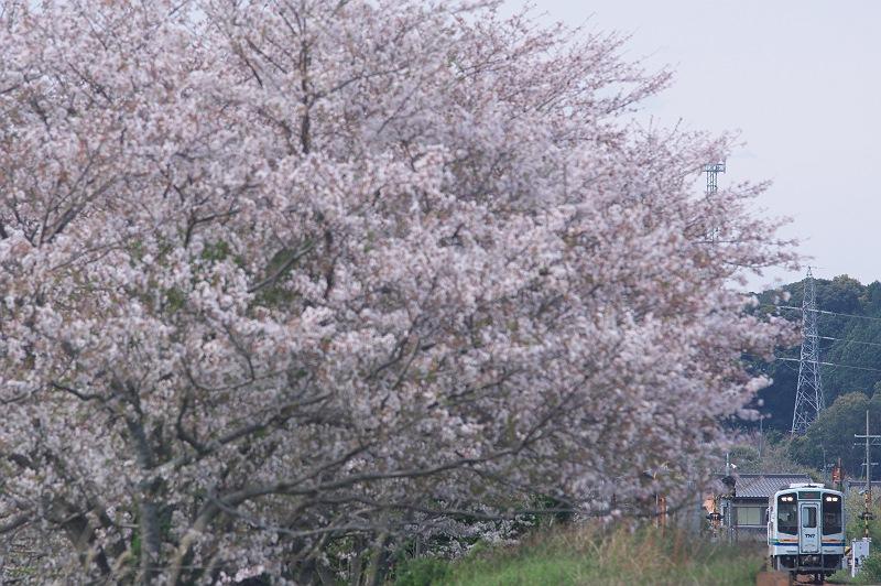天浜線の春
