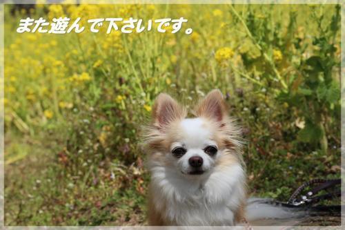IMG_8192_convert_20170409184927.jpg