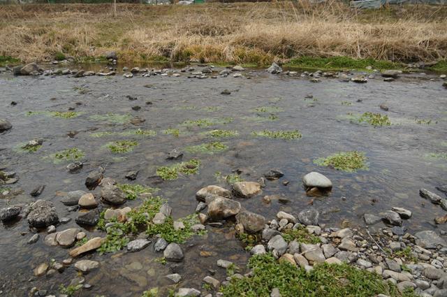 綺麗な水面 北浅川