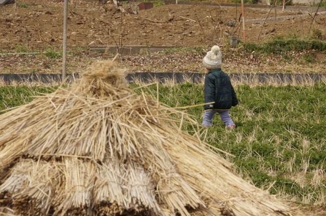 田んぼを歩く子供