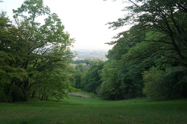 殿ヶ谷の沢の丘