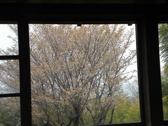 鎌田鳥山から見える桜