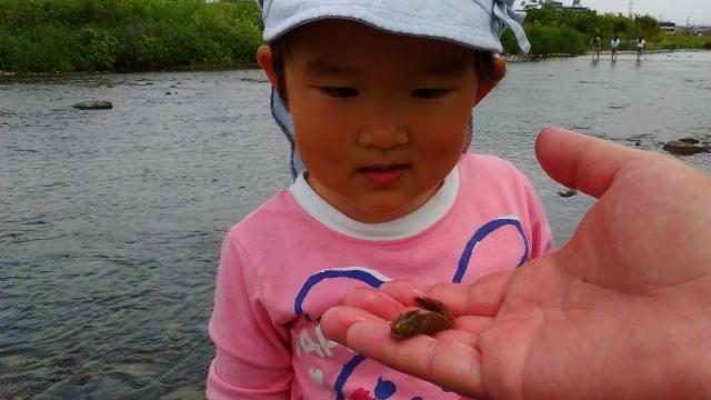 小魚を見て