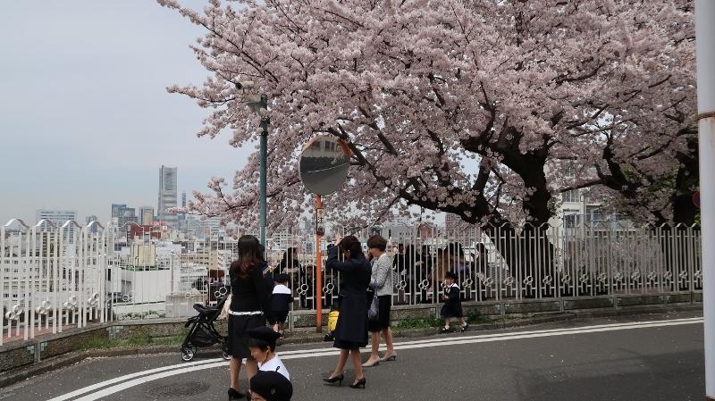 02IMG_0459横浜学院幼稚園入園式(214番館そば) (800x449)