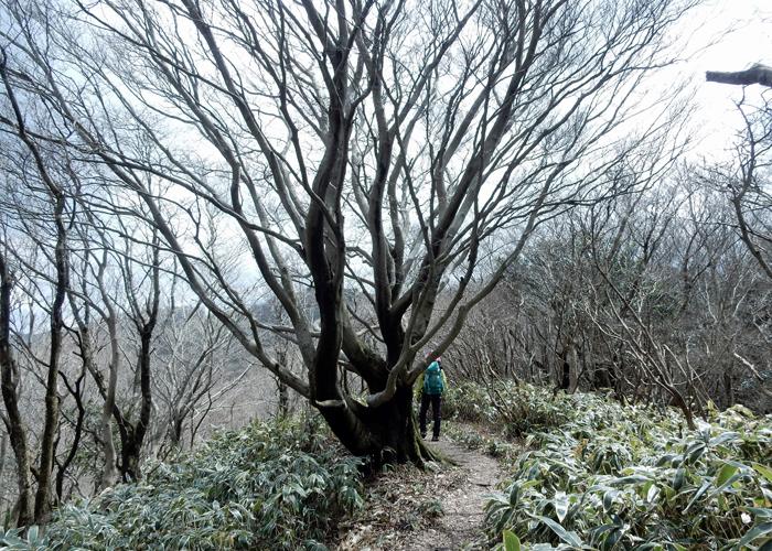 2017,4,2雷山~井原山-19
