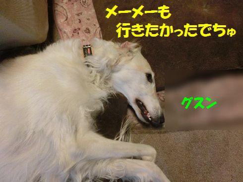 a9_2017030115512047b.jpg