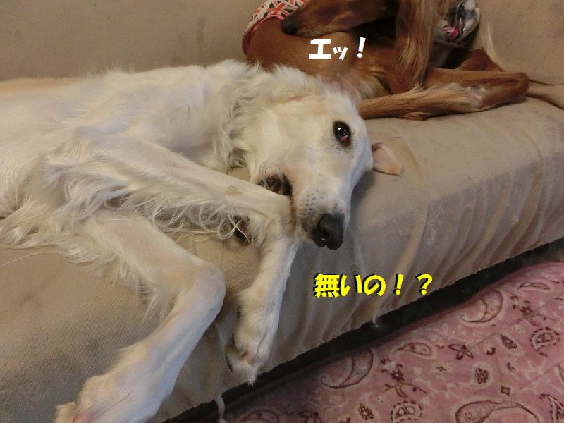 c_20170218101935d51.jpg