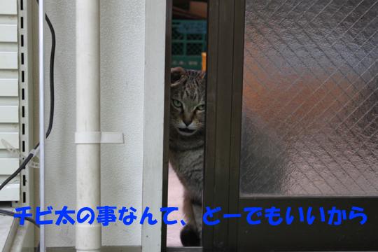 htnsici3.jpg