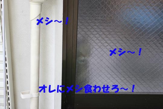 ksnitdm5.jpg