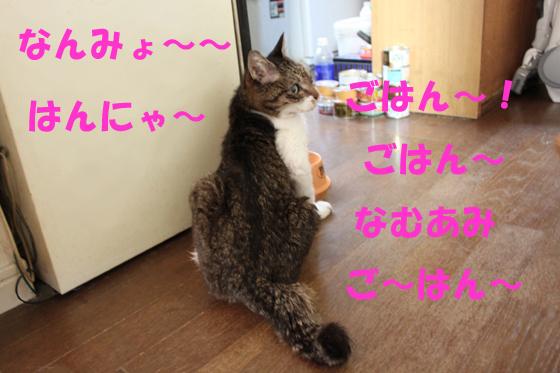 tmmjhsi4.jpg