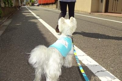 散歩スタート