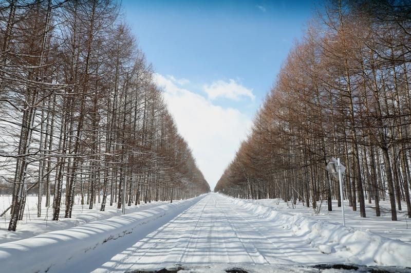 雪の風景5170218