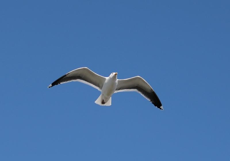 鳥6170302