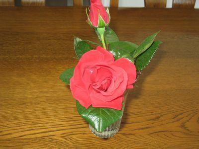 IMG_0496赤バラ