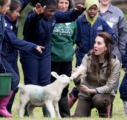 Duchess-of-Cambridge-Farms.jpg