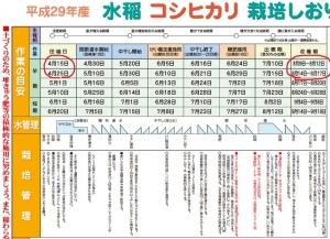 水稲栽培コシヒカリ21