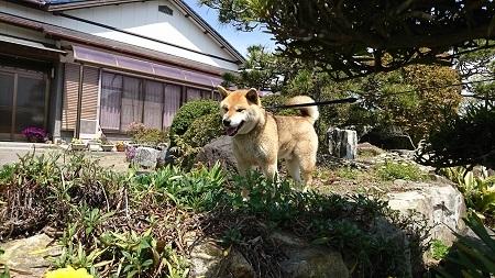 翔 2017.4.16-3