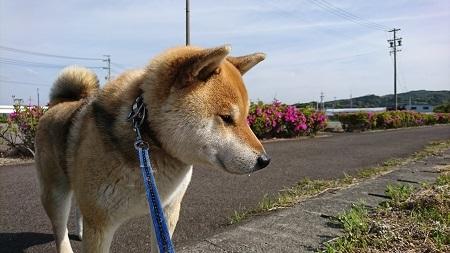 翔 2017.5.3-1