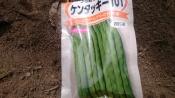 20170416春野菜1