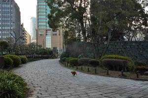 February Cat(s) Tokyo