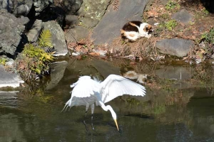 February Cat(s) Tokyo, Great Egret