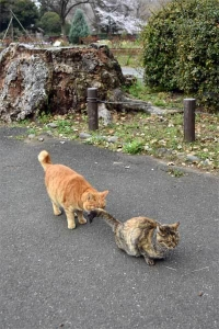 Chappy The Cat and His Friend