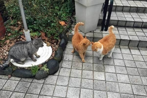 March Cat(s) Tokyo