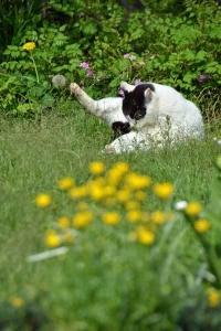 June Cat