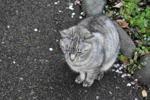 April Cat(s) Tokyo