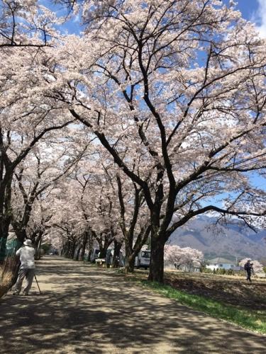 真原桜並木8