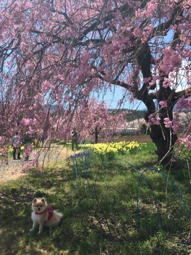真原桜並木21