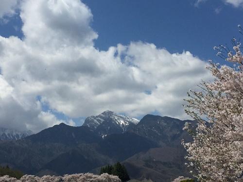 真原桜並木24