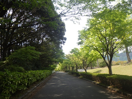 総合公園8