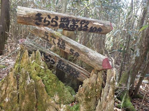 きららの森19