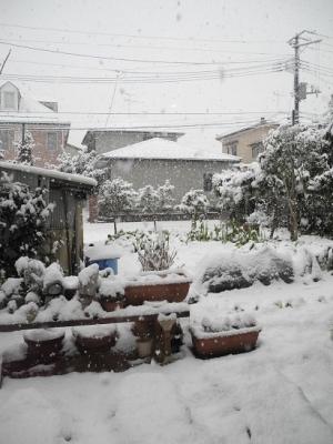 20170307午後本降りの雪