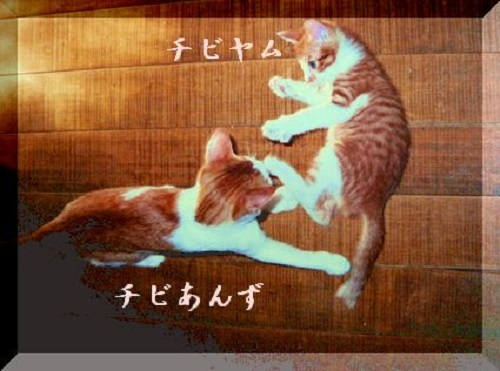 anzuyamuyamu1_20170222150514fe7.jpg