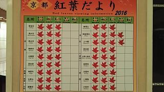 20161123京都の朝(その1)