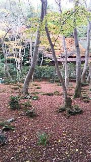 20161123祇王寺(その9)