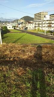 20161124野田池(その3)