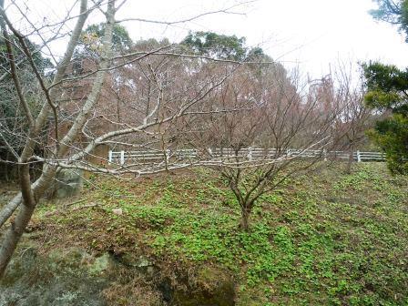 春の芽生え1(2017-02-26)
