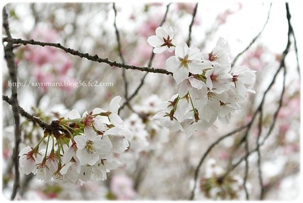 sayomaru20-63.jpg