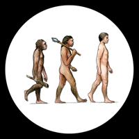 ヒト進化wikimedia