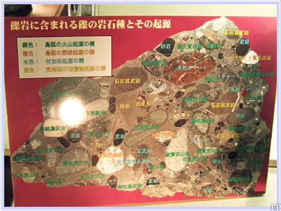 北海道大学総合博物館-礫岩